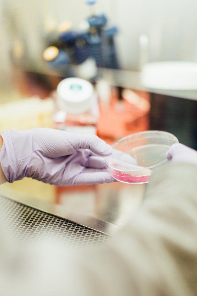 Por primera vez, eliminaron el HIV del genoma de animales vivos