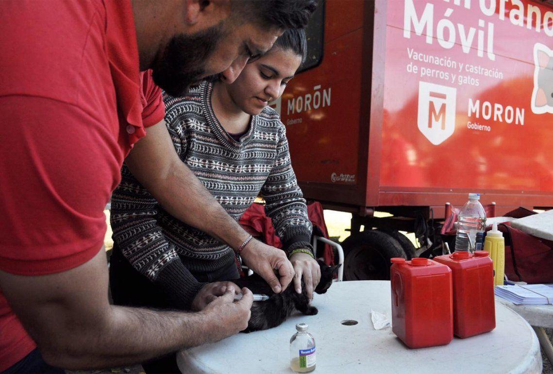 Morón: vacunaron a 48 mil mascotas con el Quirófano Móvil