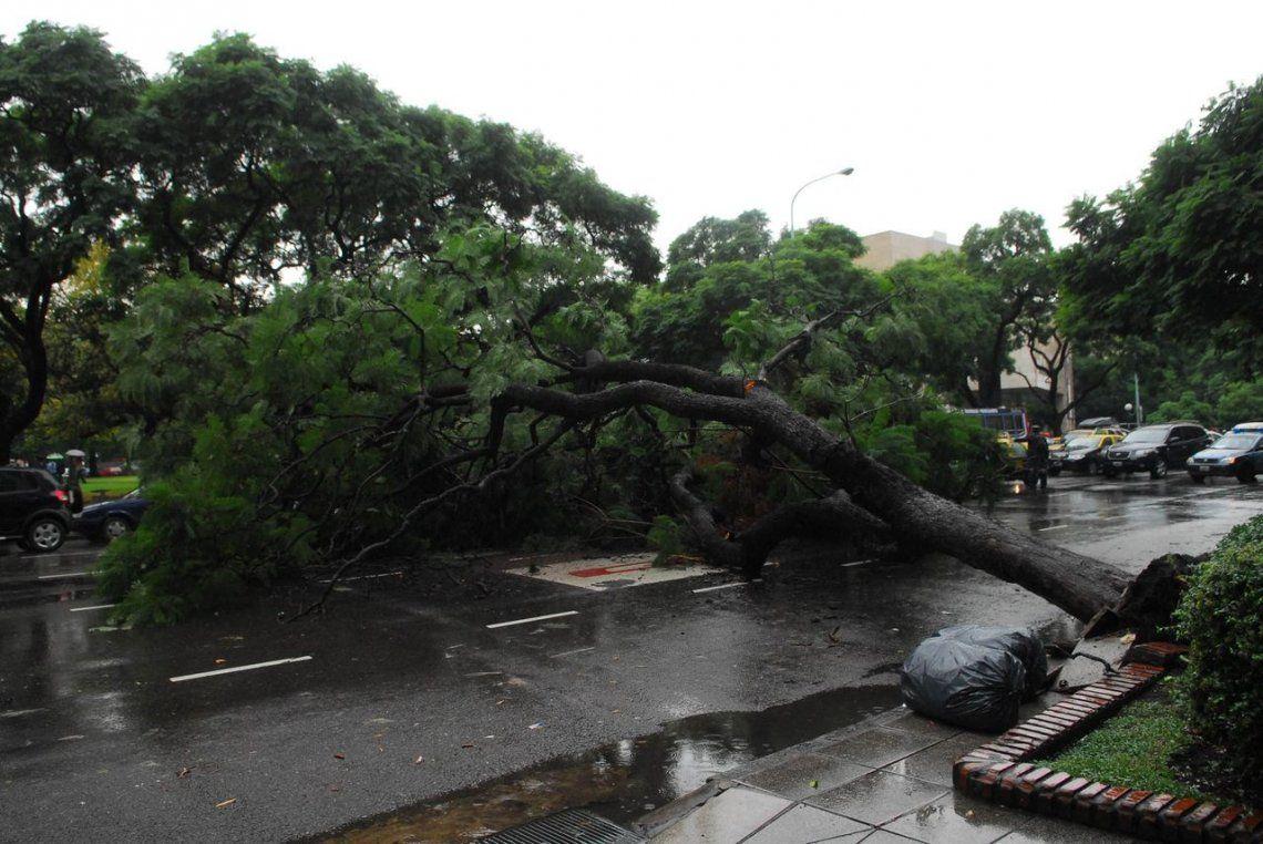 Mendoza: una mujer murió aplastada por un árbol derribado por el Zonda
