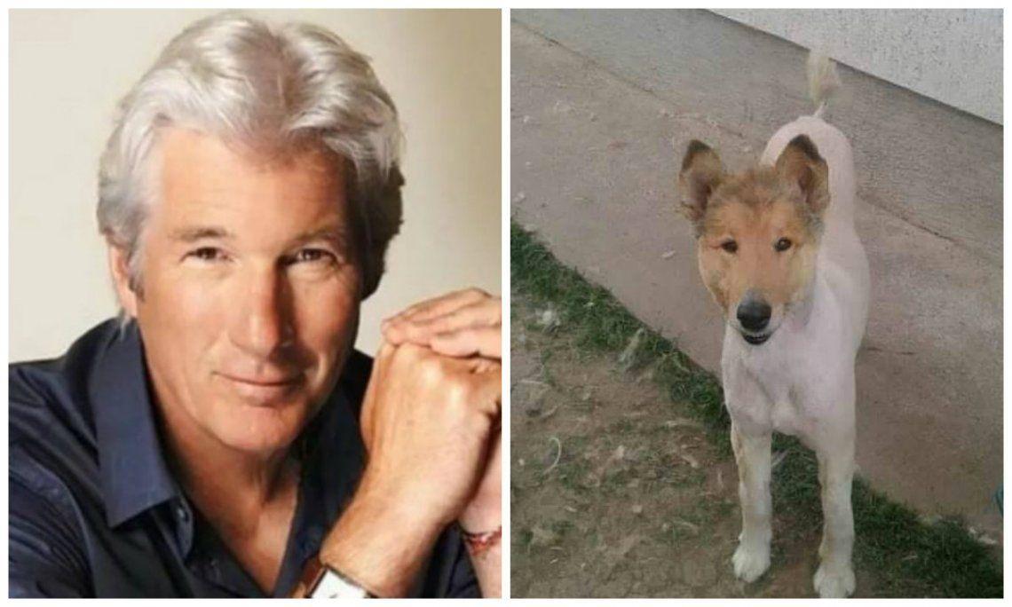 Viral | Furor en las redes sociales por perro parecido a Richard Gere