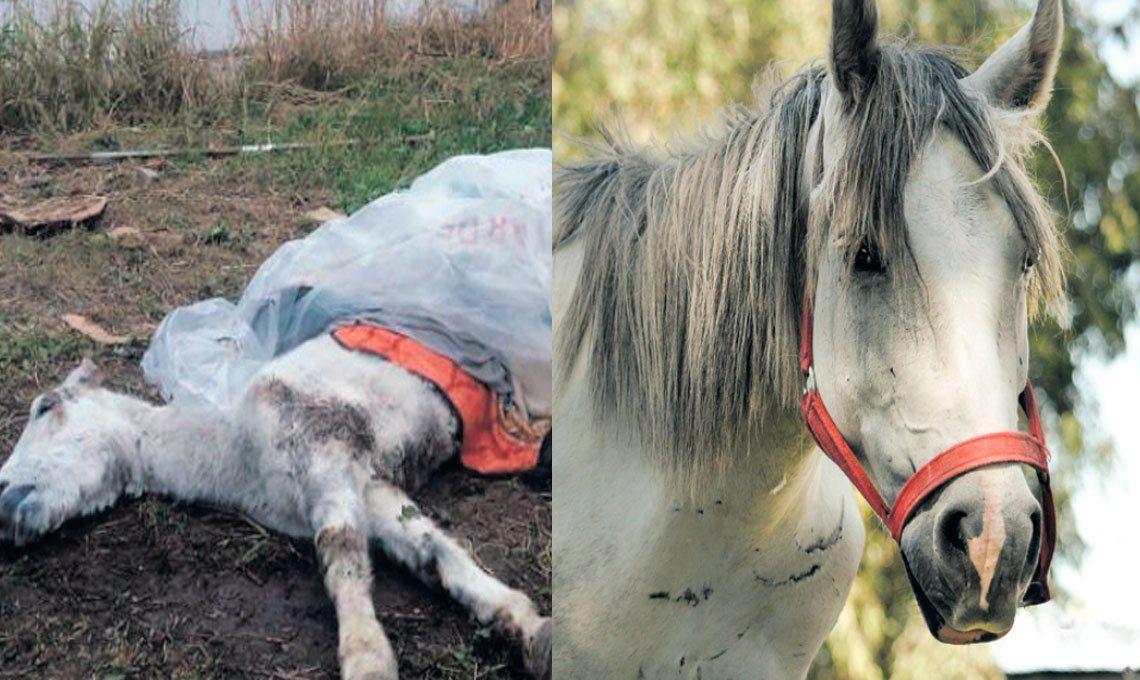 ACMA y una vocación que ya salvó a más de 500 caballos