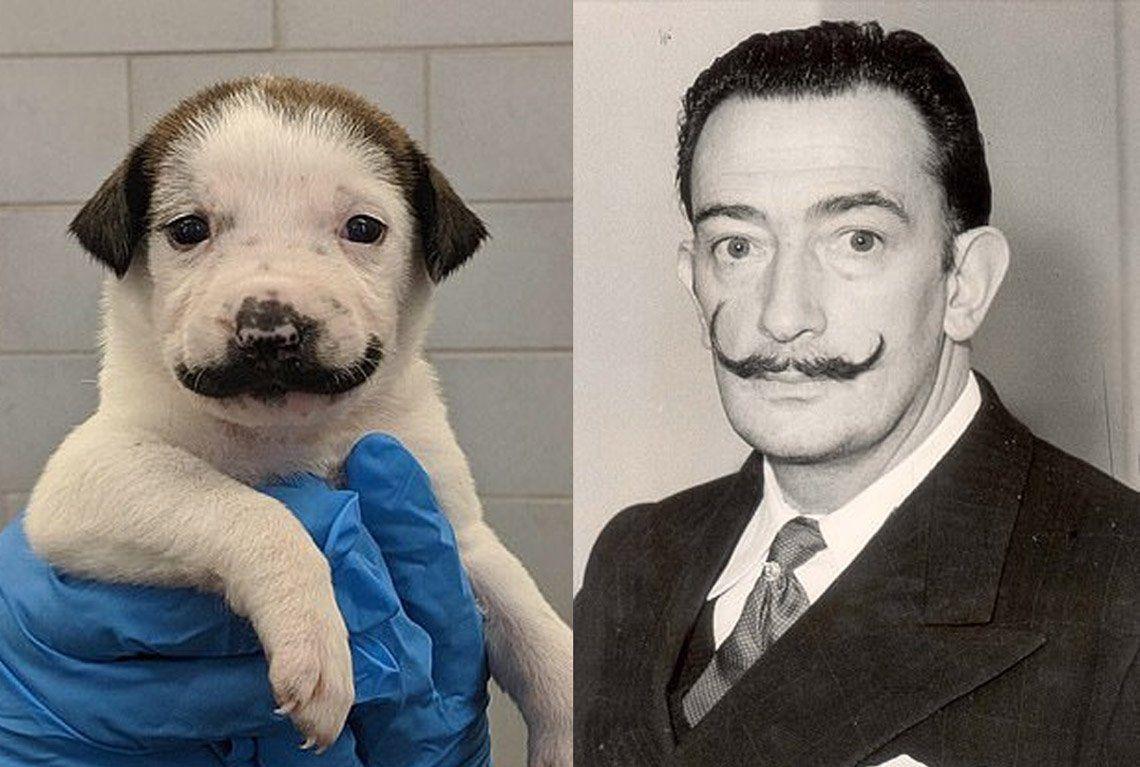 Salvador Dolly, la perrita que se volvió viral por su parecido con Salvador Dalí