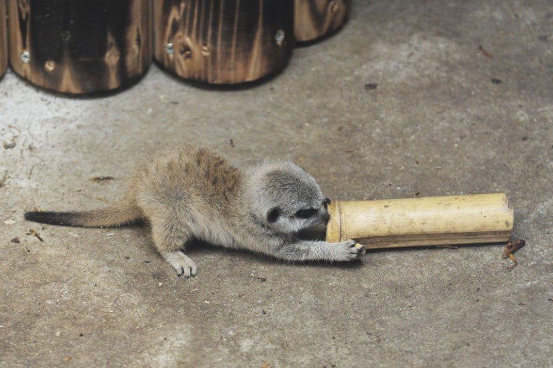 Картинки по запросу lemur