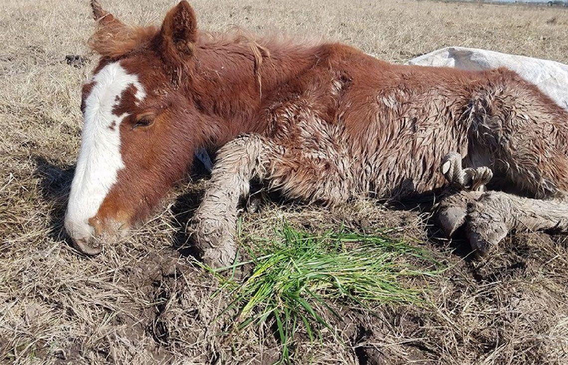 ONG Caballos de Quilmes  acudió en ayuda de equinos rescatados en Ezeiza
