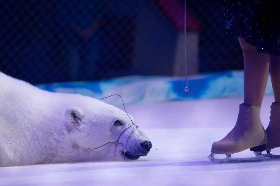 Los animales continúan siendo explotados para el entretenimiento de los turistas