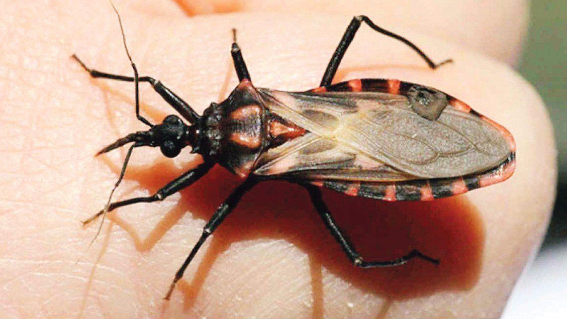 Advierten de falencias en medidas contra el Chagas