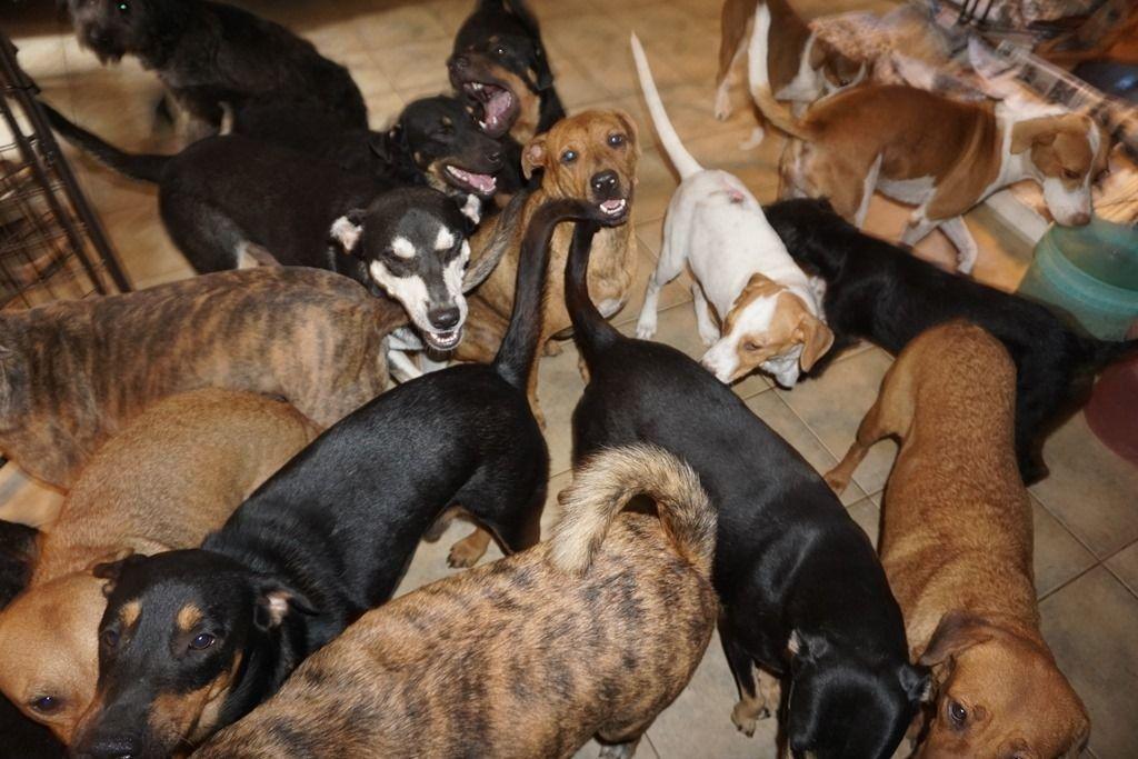 Huracán Dorian: mujer rescató en su casa a 97 perros perdidos