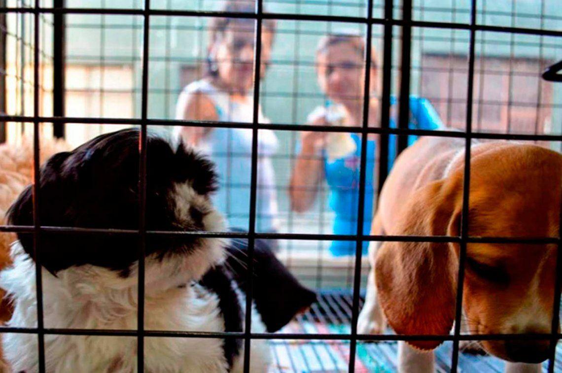 Prohíben exhibir animales en vidrieras en la Ciudad de Buenos Aires