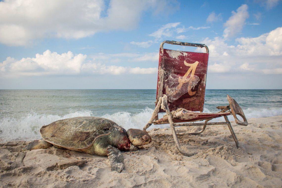 Una tortuga murió después de ser atada a una silla de playa en el Refugio Nacional de Vida Silvestre Bon Secour de Alabama