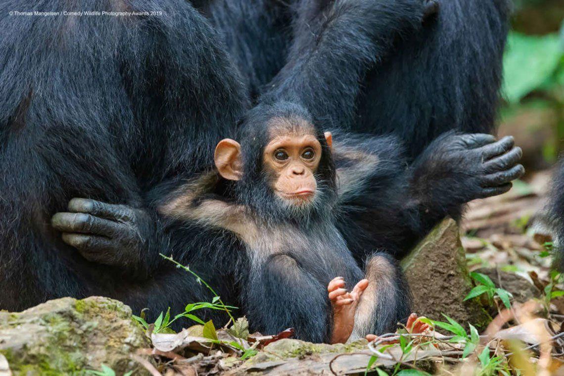 Las fotos más divertidas de animales del Comedy Wildlife Photography 2019