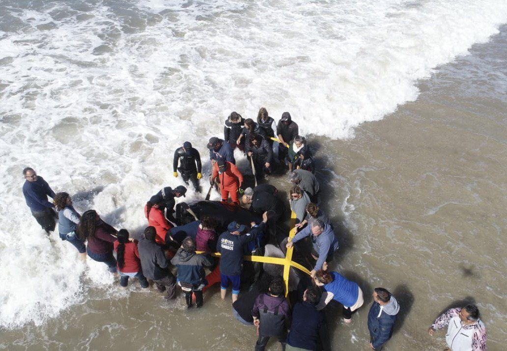 Medio Ambiente: crean red de rescate de fauna marina.