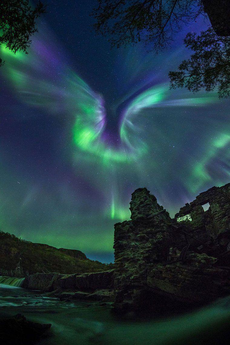 Aurora Is A Bird   Alexander Stepanenko
