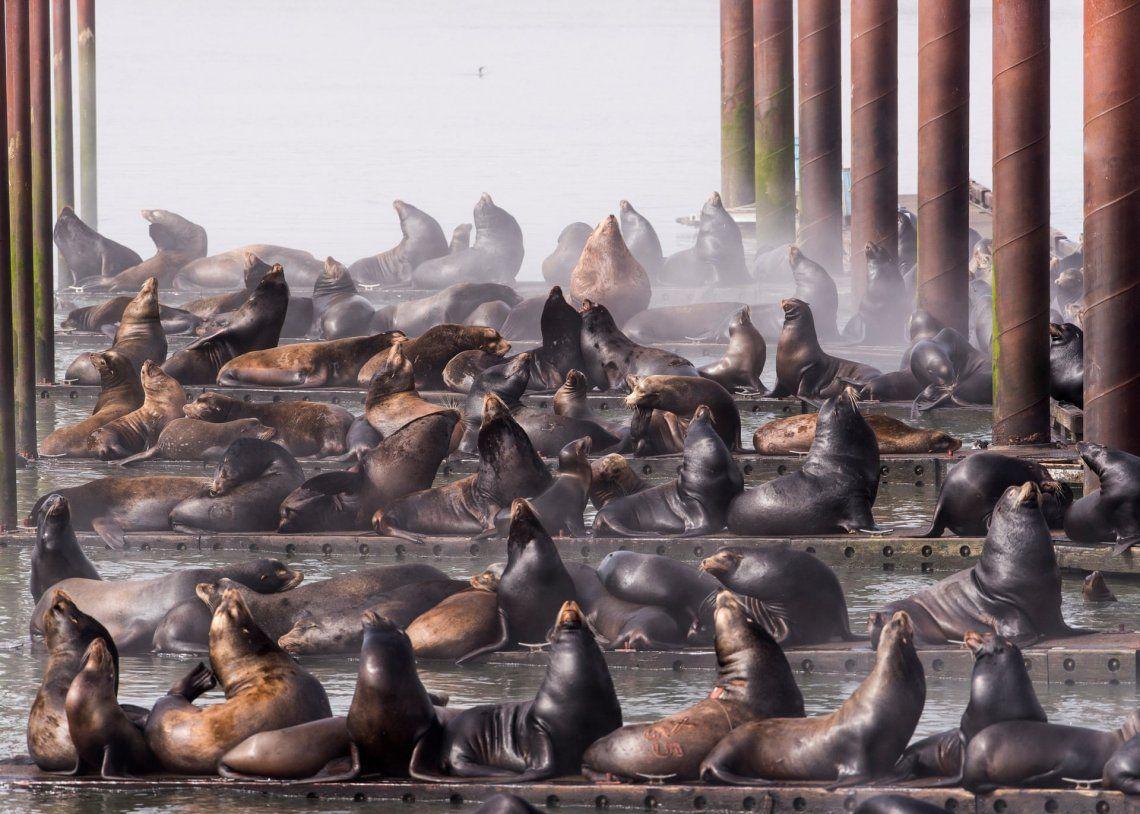 Tercer lugar: ciudades y naturaleza | Lobos de mar de California por Robert Potts
