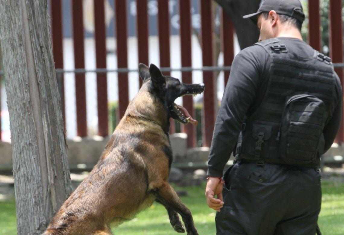 El perro ya es el mejor amigo y protector del diputado mexicano