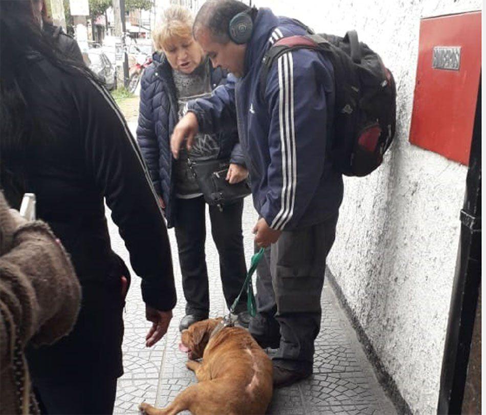 Quilmes: detuvieron al Loco del pitbull en San Francisco Solano