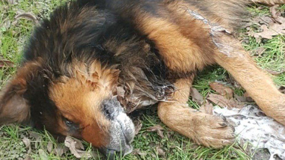 Pilar: preocupación por la aparición de 40 animales envenenados
