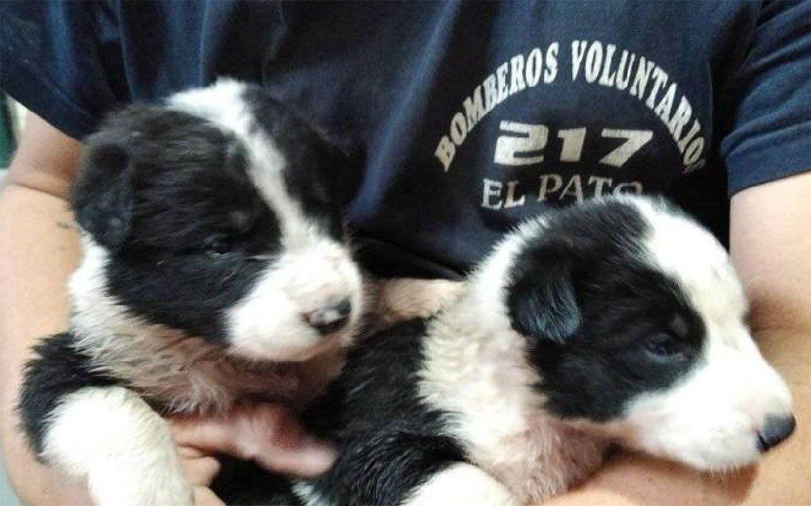 Berazategui: bomberos buscan familia para dos cachorros rescatados de un zanjón