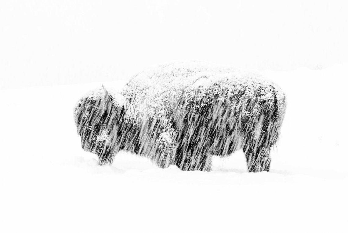 Ganador en blanco y negro: Snow Exposure de Max Waugh