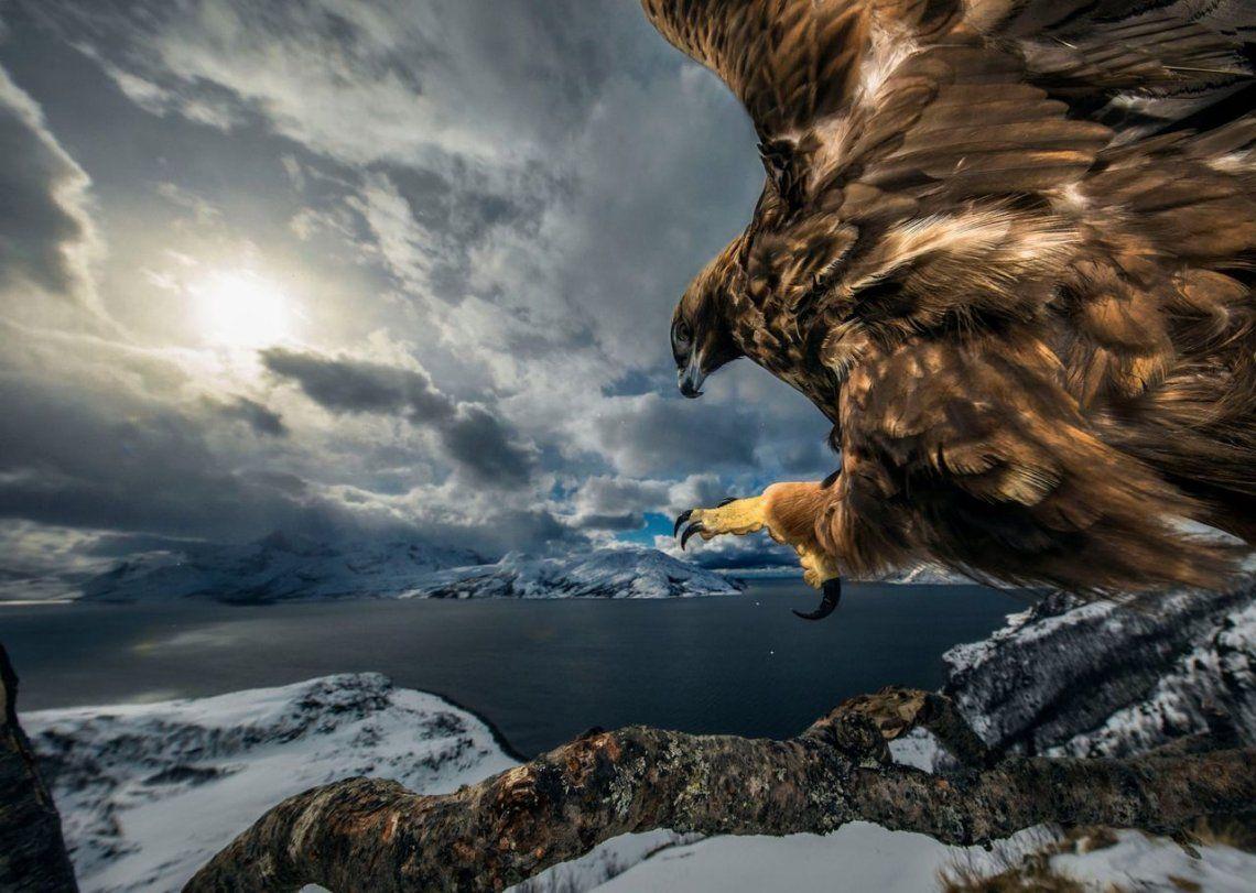 Ganador del comportamiento de las aves: Land of the Eagle por Audun Rikardsen