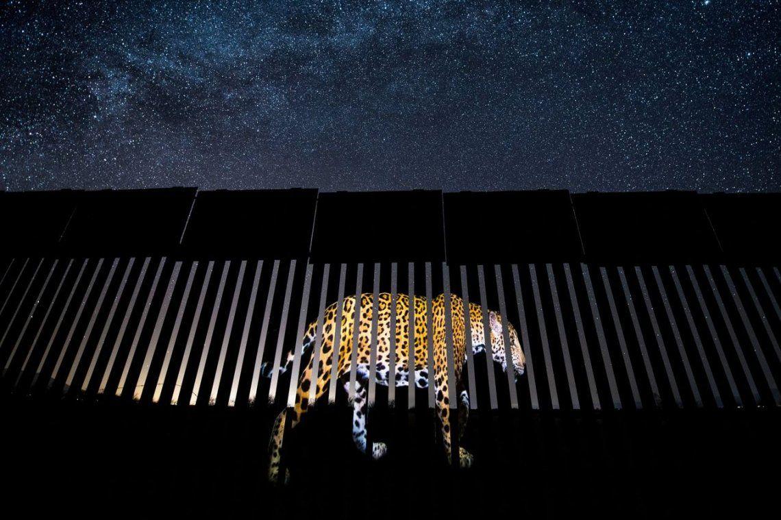 Fotoperiodismo de vida silvestre: Otro migrante excluido por Alejandro Prieto