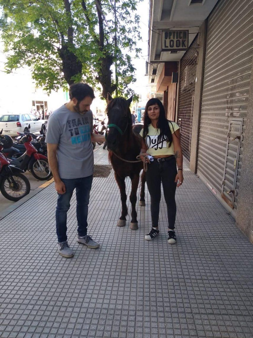 Zárate: un caballo de tiro fue rescatado luego de un accidente vial