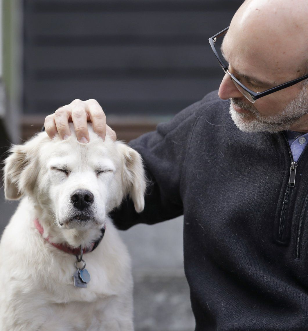 Perros viejos para enseñar trucos nuevos