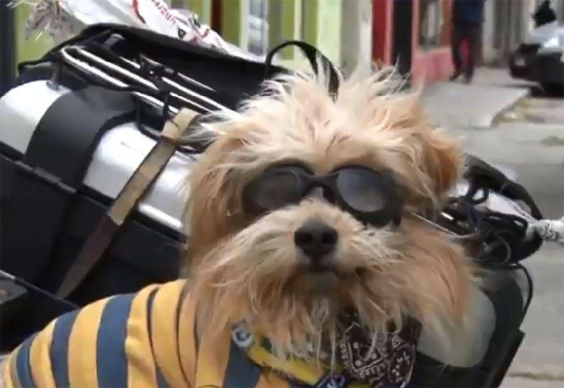 Florencio Varela: se fue de viaje Pocho, el perro motoquero