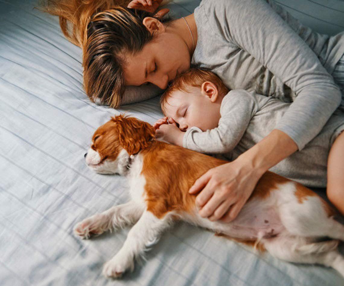 Dormir con los perros: un viejo debate que sigue vigente