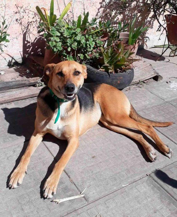 Gema es una perra muy sociable y busca un hogar
