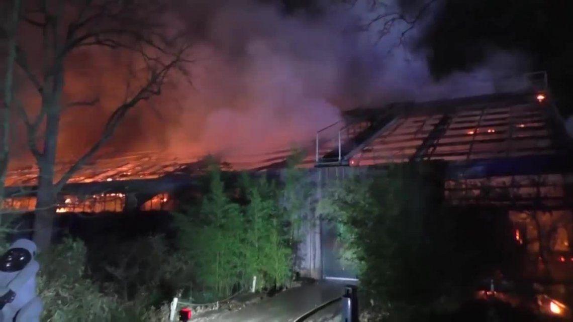 Alemania | Globos lanzados en Año Nuevo incendiaron zoológico: 30 animales muertos