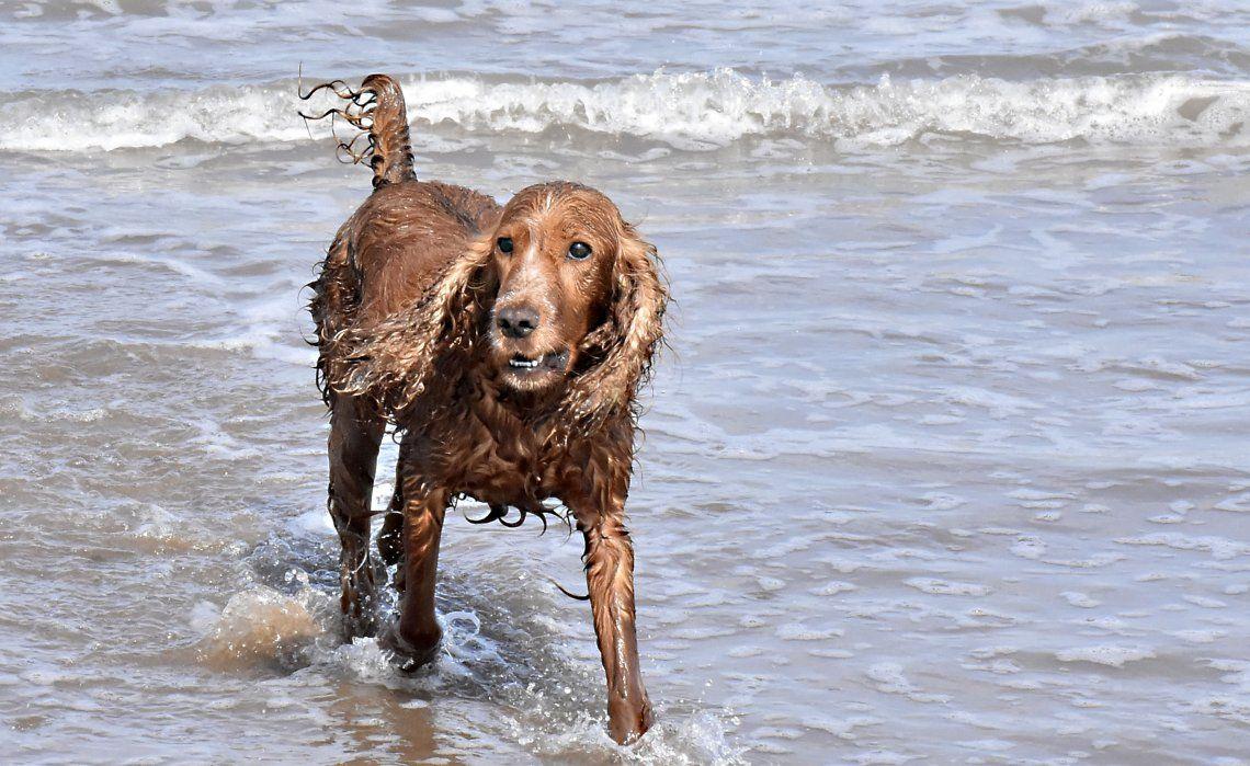 Los perros tienen su propio balneario