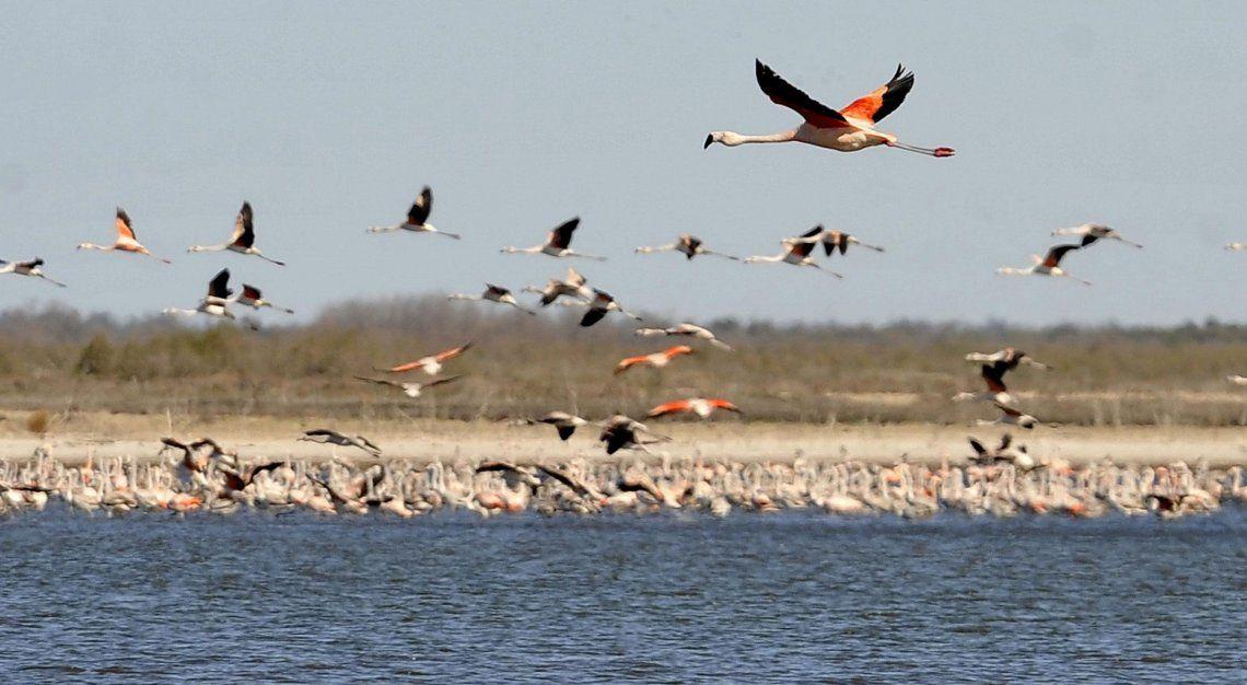 Mar Chiquita, una de las lagunas más importantes del mundo, aguarda por la designación de Parque Nacional para ser el más grande de Argentina