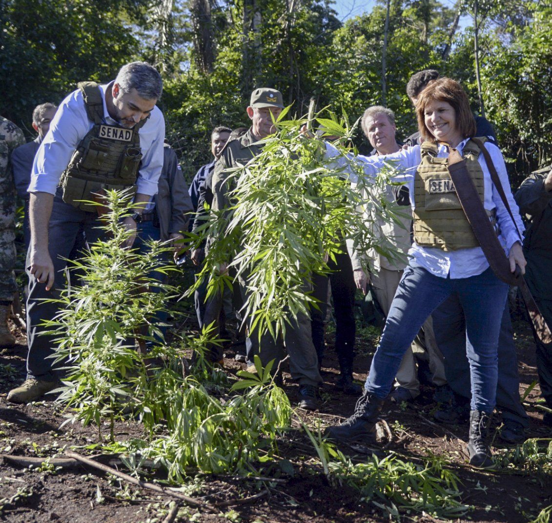 El fracaso del programa Argentina Sin Narcotráfico de Bullrich y la dura crítica de Frederic: en el 93% de los operativos se incautó menos de 100 gramos de marihuana