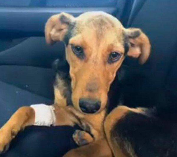 Tafi fue rescatada del abandono y espera una familia adoptiva