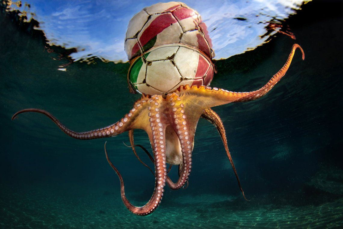 Octopus Training por Pasquale Vassallo (Italia)