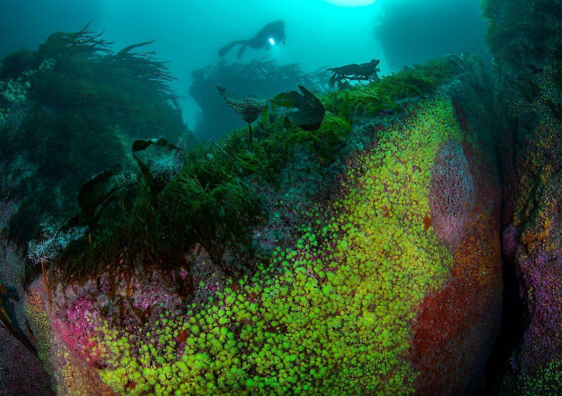 Jewel Reef por Arthur Kingdon (Reino Unido)