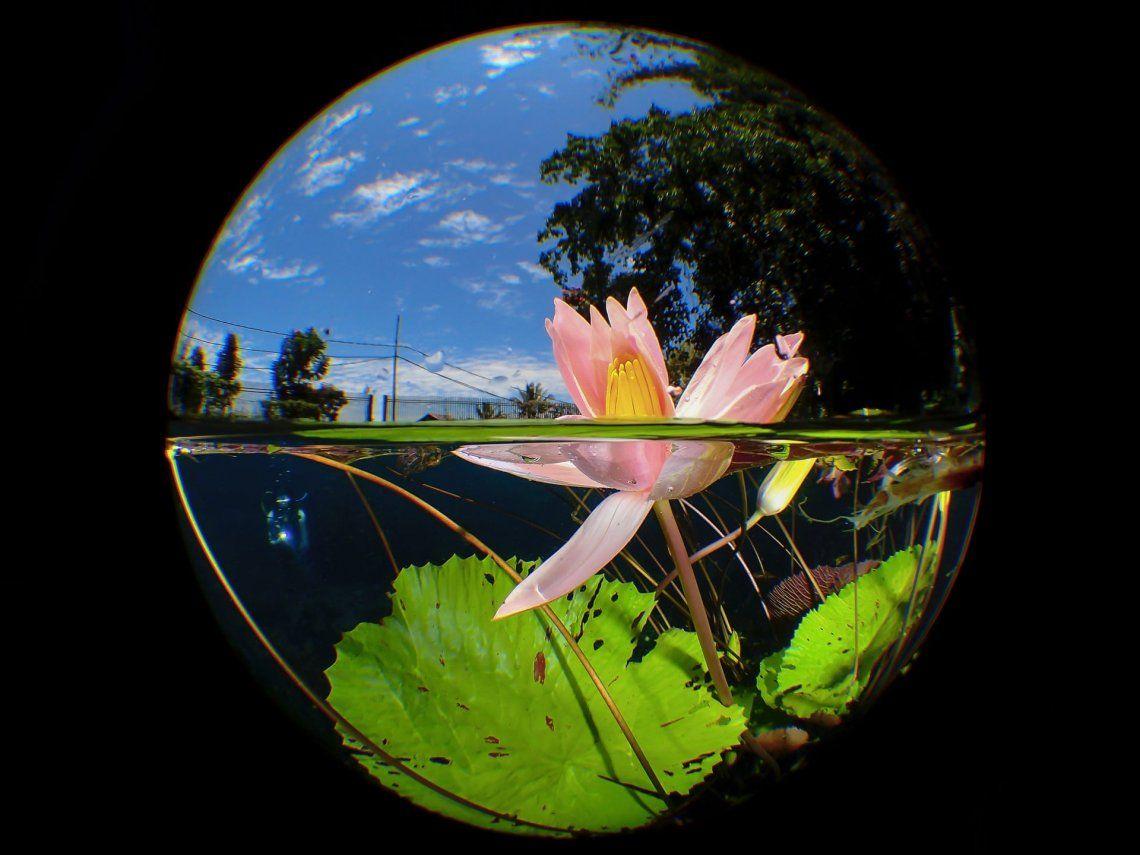 Uluna Lily por Man BD (Malasia)