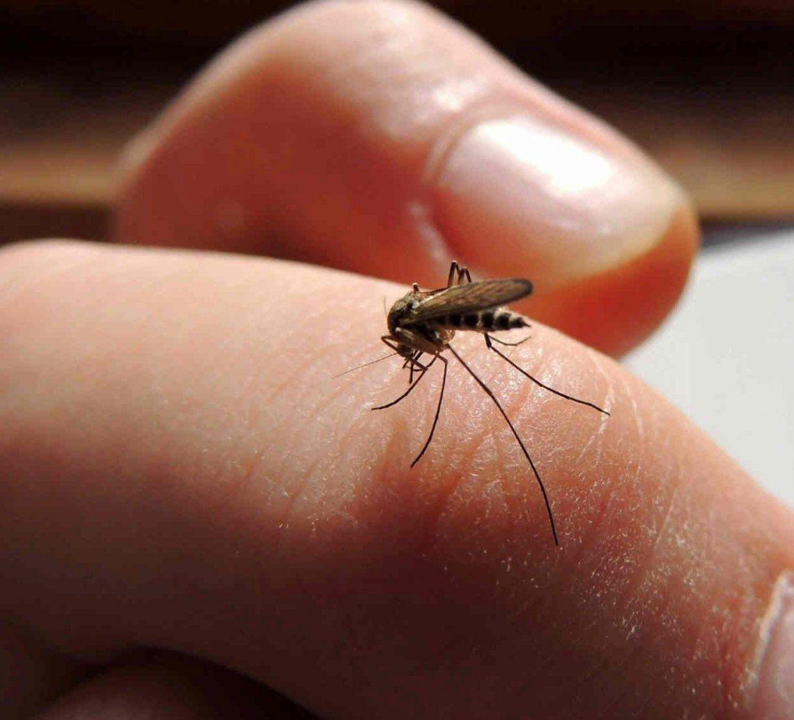 El dengue ya circula en 15 provincias del país.