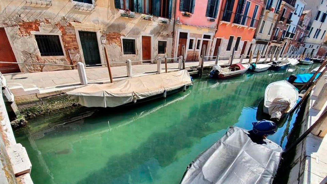 Por la cuarentena, delfines, jabalíes y cisnes se pasean por los canales de Venecia