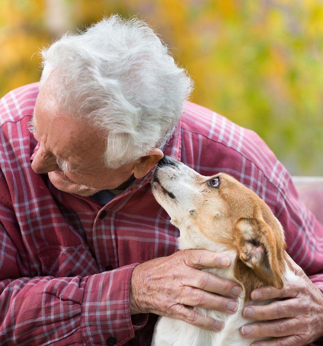 Mascotas reducen la sensación de soledad en los adultos mayores