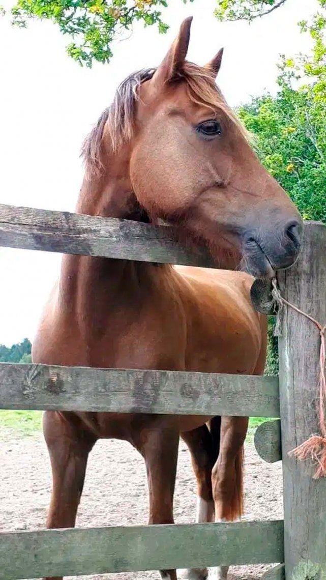 Aburrida por la cuarentena afeitó a su caballo como una jirafa