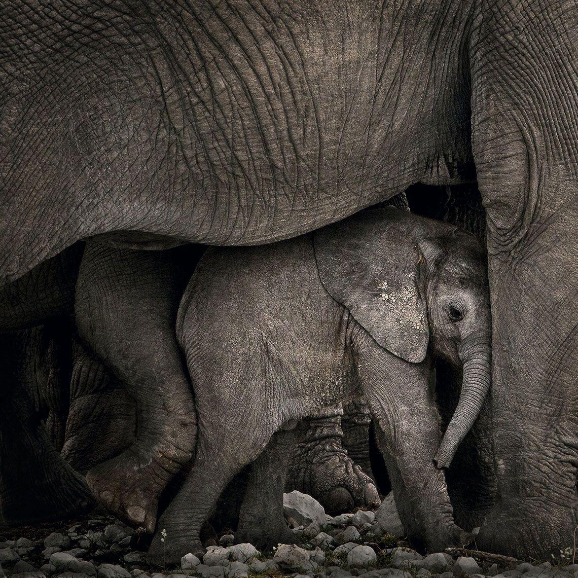 Un pequeño elefante con la manada en el parque nacional de Etosha
