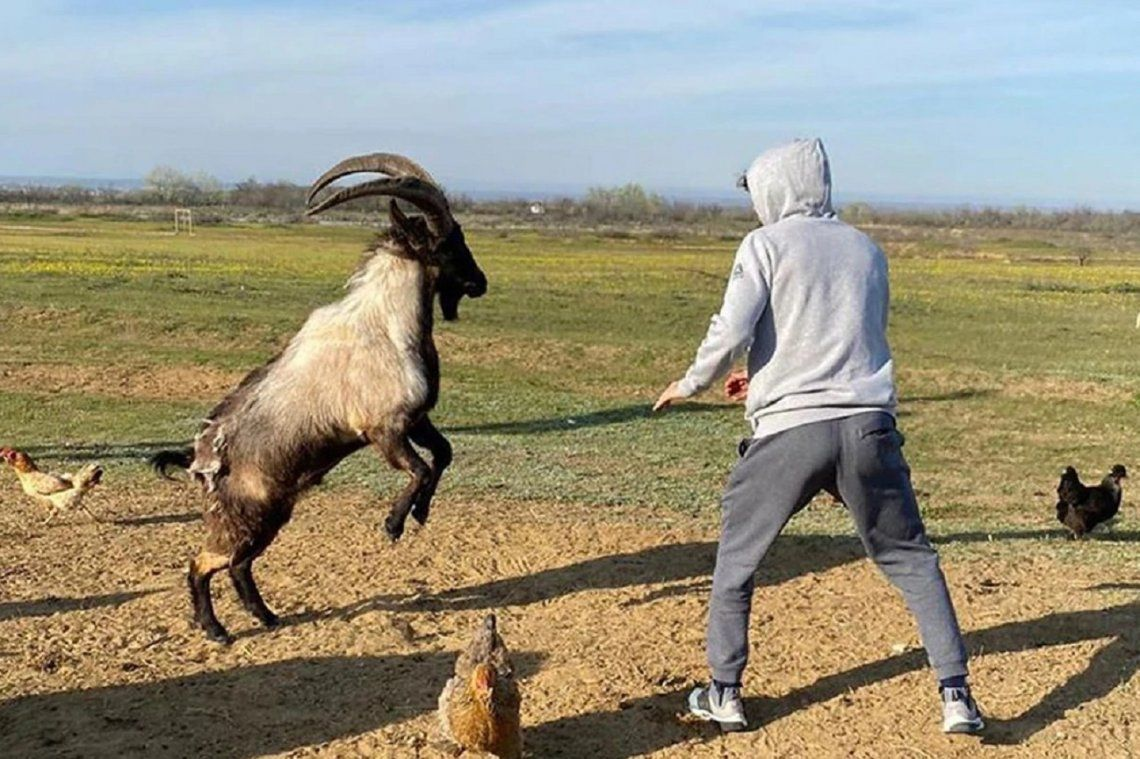 Zabit Magomedsharipov, luchador de UFC, peleó contra una cabra en cuarentena y fue criticado por maltrato animal