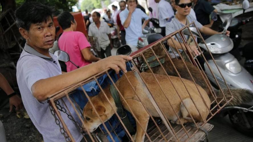 China: prohíben criar perros para consumo humano