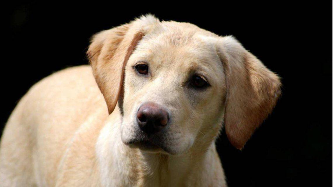Día del Perro: porqué se celebra en nuestro país
