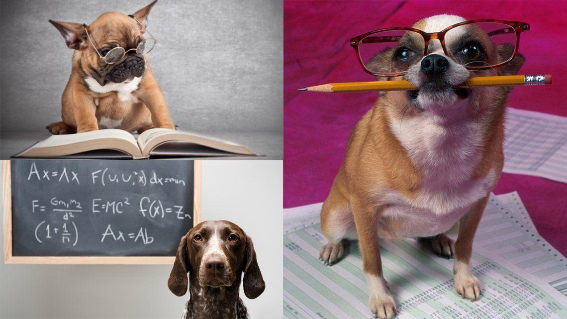 Los 5 perros más inteligentes del mundo