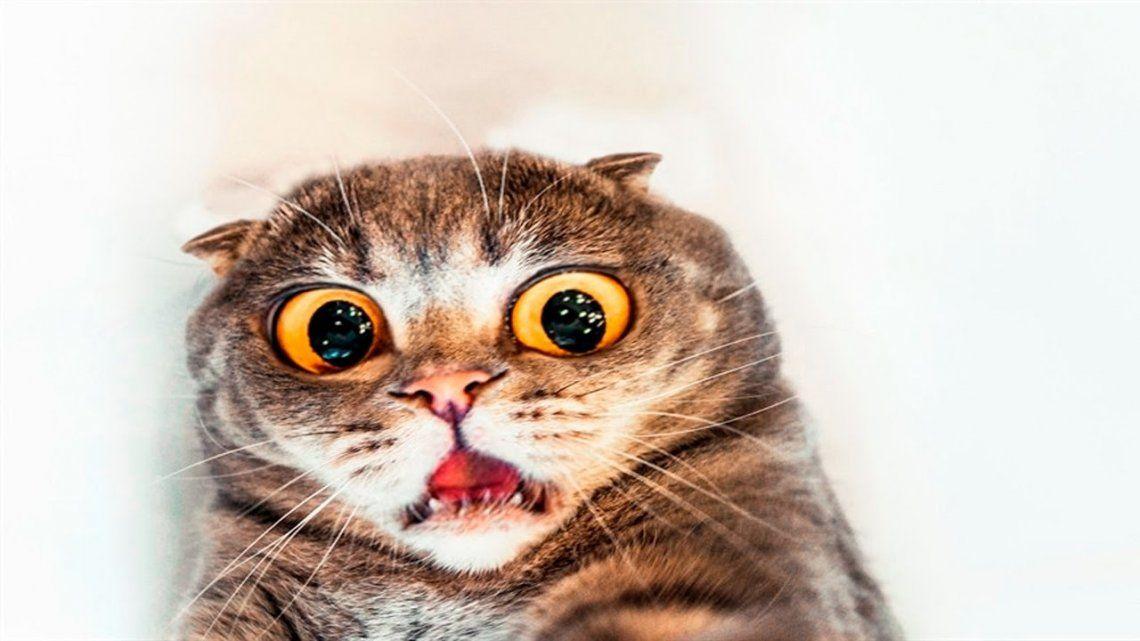 Los valientes gatos tienen tres grandes miedos