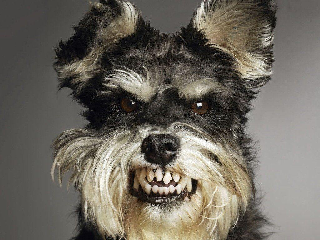 Cinco cosas que los perros detestan de las personas