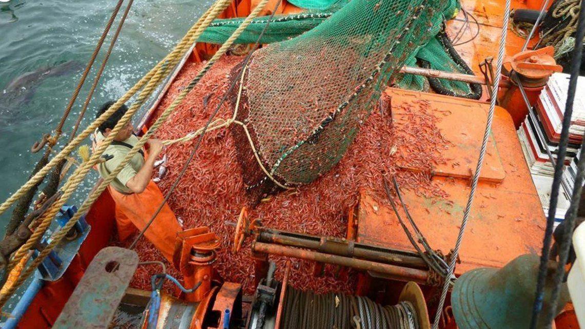 Las cámaras pesqueras repudian bloqueo del SOMU a plantas procesadoras