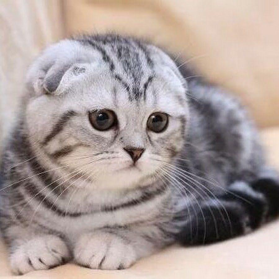 Los 10 gatos más caros del mundo